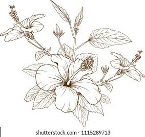 Hibiscus flowers vector by hand drawing.flower design elements.