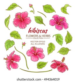 hibiscus flowers vector set on white background