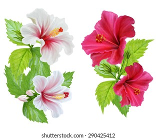 Hibiscus flowers. White and red hibiscus