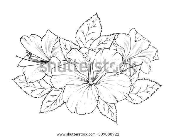 Image Vectorielle De Stock De Hibiscus Et Fleurs De Lys