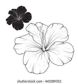 Outline Hibiscus Flower High Res Stock Images Shutterstock
