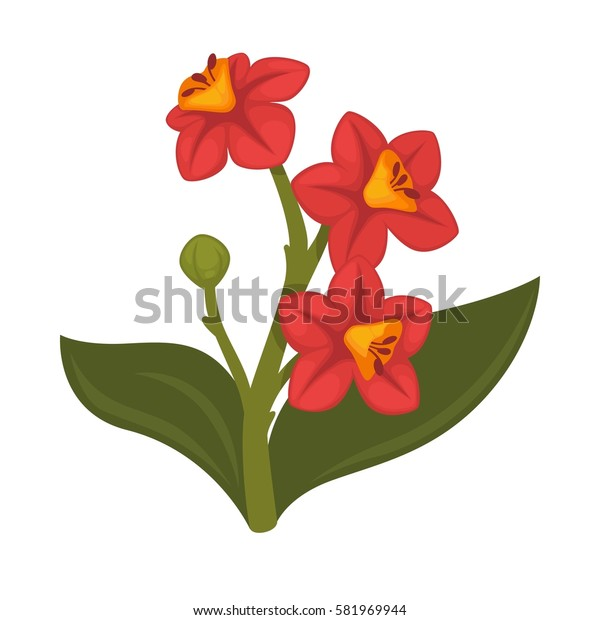Hibiscus plant realistic vector illustration. Rose mallow flower with green leaves isolated on white background. Pot herb widely used in home decor, and in flower bouquets composition.