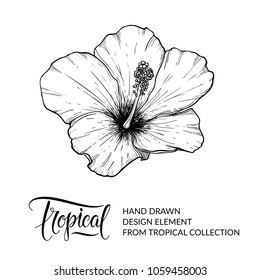 Hibiscus. Tropical flower isolated. Exotic floral design element for hibiscus tea packaging. Hawaiian flower. Black and white graphic, sketch. Nature and plant. Vector illustration. EPS 10.
