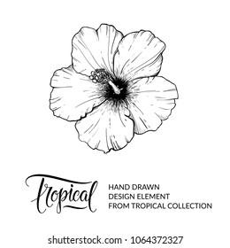 Hibiscus Flower Images Stock Photos Vectors Shutterstock