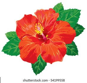 Hibiscus without gradients. Vector