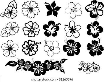 hibiscuses