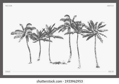 High detail hand drawn vector illustration of palm trees, realistic drawing of oasis, sketch