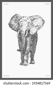 High detail hand drawn vector illustration of elephant, realistic drawing, sketch