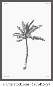 High detail hand drawn vector illustration of palm tree, realistic drawing, sketch