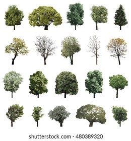 high detailed vector illustrations of trees