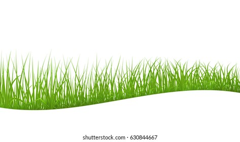 High quality green grass, abstract wave background, vector illustration.