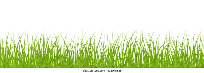 High quality green grass on white background, seamless vector illustration.