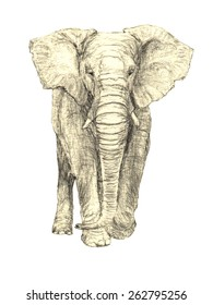 High quality hand drawn African Elephant vector with transparent background. Use for any project, prints out well on white / beige / natural colour paper.