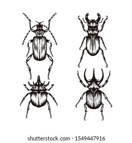 Highly Detailed Insects Sketches. Hand Drawn Beetles Vector Set. Vintage Entomological Drawing