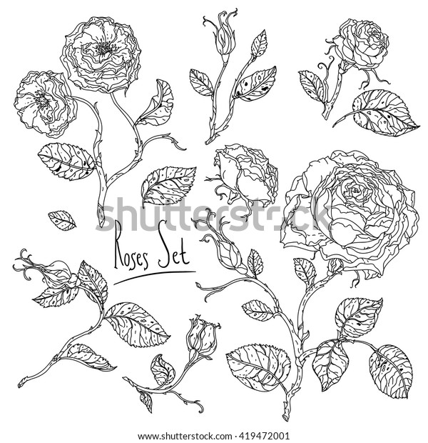 Highly Detailed Uncolored Colouring Book Style Stock Vector