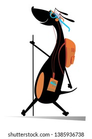Hiking dog, rucksack, walking stick and music player illustration. Hiking smiling dachshund with rucksack and stick goes on travels and listens music on music player isolated on white illustration