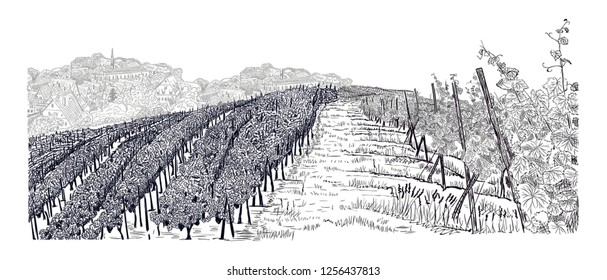 Hill of vineyard landscape with city on horizont hand drawn sketch vector illustration isolated on white