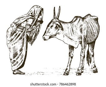 Hindu monk with a sacred Indo-Aryan cow in India. traditional animal. engraved hand drawn in old sketch, vintage style.