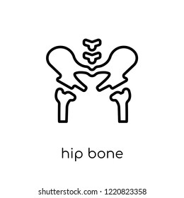 Hip Bone icon. Trendy modern flat linear vector Hip Bone icon on white background from thin line Human Body Parts collection, editable outline stroke vector illustration