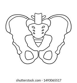 Hip bones structure. Human male anatomy scheme. Main pelvic bones - sacrum, ilium, coccyx, pubis, ischium. Vector outline illustration isolated on white background