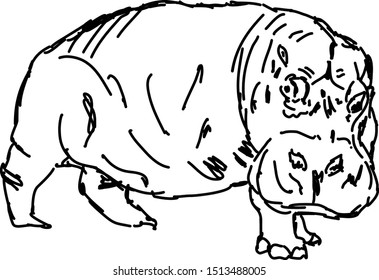 Hippo drawing, illustration, vector on white background.