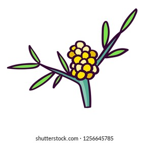 Hippophae plant. Hand made illustration of colorful flower. Isolated flovers. Botanical illustration of sea buckthorn.
