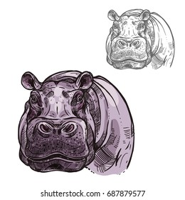 Hippopotamus hippo head or muzzle sketch icon. Vector isolated African wild mammal of pygmy hippo animal for zoology, mascot blazon of sport team, wildlife savanna nature