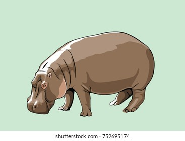 hippopotamus portrait .illustration vector