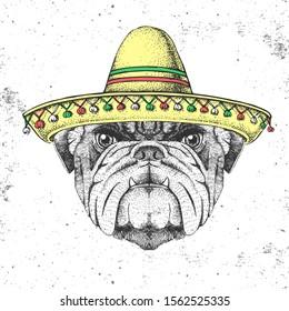 Hipster animal bulldog wearing a sombrero hat. Hand drawing Muzzle of bulldog