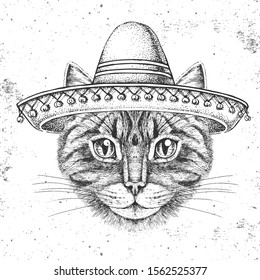 Hipster animal cat wearing a sombrero hat. Hand drawing Muzzle of cat