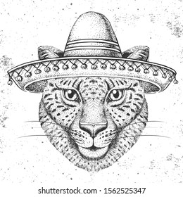 Hipster animal cheetah wearing a sombrero hat. Hand drawing Muzzle of cheetah