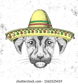 Hipster animal dog wearing a sombrero hat. Hand drawing Muzzle of dog