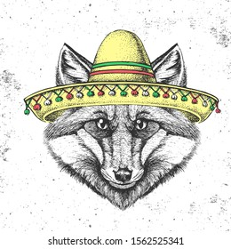 Hipster animal fox wearing a sombrero hat. Hand drawing Muzzle of fox