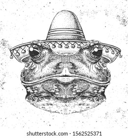 Hipster animal frog wearing a sombrero hat. Hand drawing Muzzle of frog