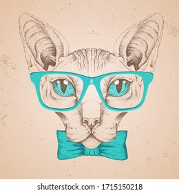 Hipster animal head of sphynx cat. Hand drawing Muzzle of sphynx cat