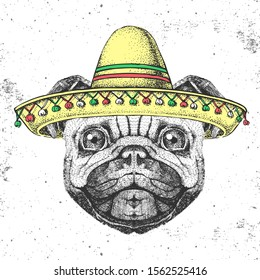 Hipster animal pug-dog wearing a sombrero hat. Hand drawing Muzzle of pug dog