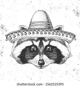 Hipster animal raccoon wearing a sombrero hat. Hand drawing Muzzle of raccoon
