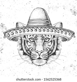 Hipster animal tiger wearing a sombrero hat. Hand drawing Muzzle of tiger