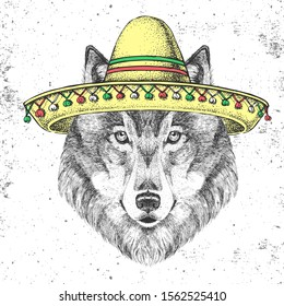 Hipster animal wolf wearing a sombrero hat. Hand drawing Muzzle of wolf