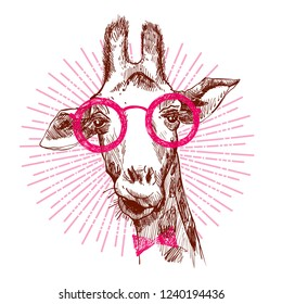 A hipster stylish giraffe. Hand drawn giraffe for poster. Sketch of the giraffe facial head. Giraffe with divergent rays from him.