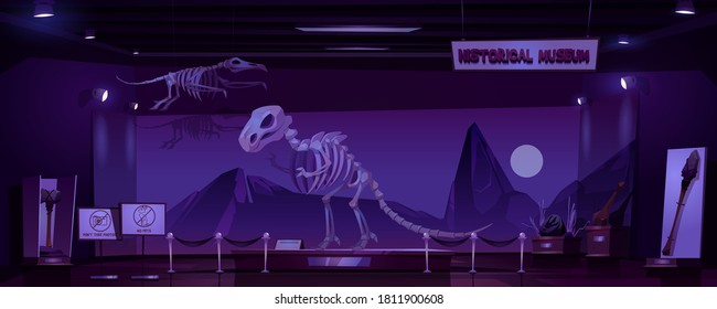 Historical museum with dinosaur skeleton and archeological exhibits at night. Vector cartoon interior of empty dark room of exhibition with prehistoric animals and primitive tools