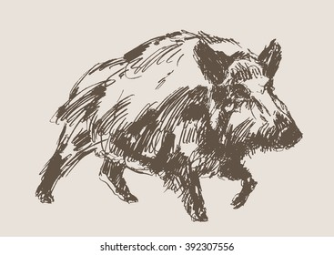 hog vector, hand draw sketch