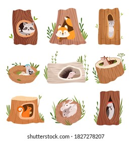 Holes in tree. Home hollow for wild animals trunk leaves treetops birds and squirrel vector characters
