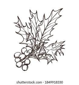 Holly berries hand drawn outlines. Winter holiday symbol. Festive decorative attribute of Christmas. Monochrome vector illustration isolated on white background.