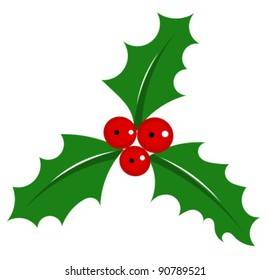 Holly berry - symbol of Christmas over white. Vector illustration