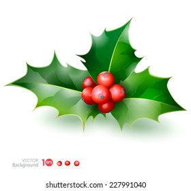 Holly. Christmas Holly Berry. Vector  EPS 10.