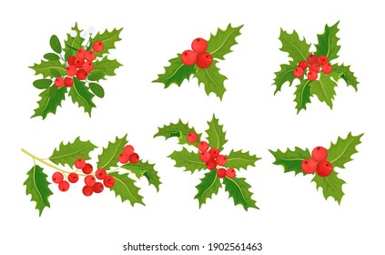 Holly, ilex branch with berry and leaves. Set of mistletoe. Christmas decorations. Isolated illustration on a white background. Vector graphics.