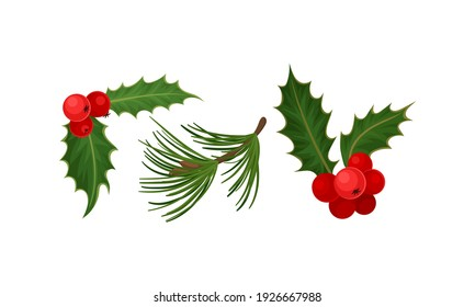Holly Specie Twig with Red Berries and Tree Needle Branch Vector Set