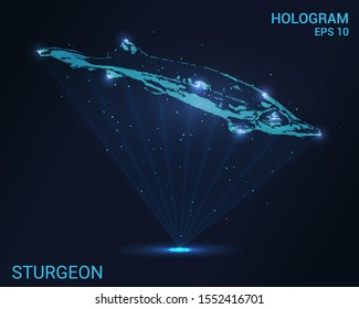 Hologram of sturgeon. Holographic projection of sturgeon. Flickering energy flux of particles. Scientific design animals.