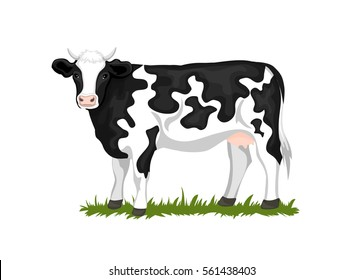 Holstein Black and white patched coated cow, isolated vector illustration